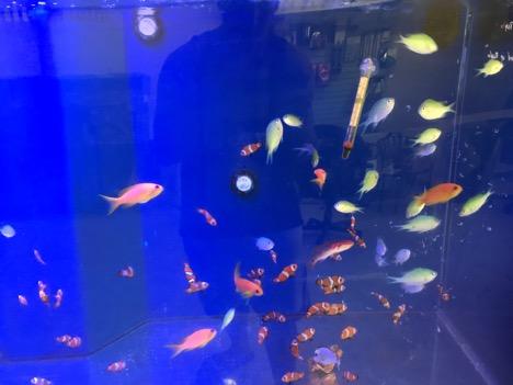 Wolf's Aquatic Reef Designs | Aquarium fish experts in Ventura County